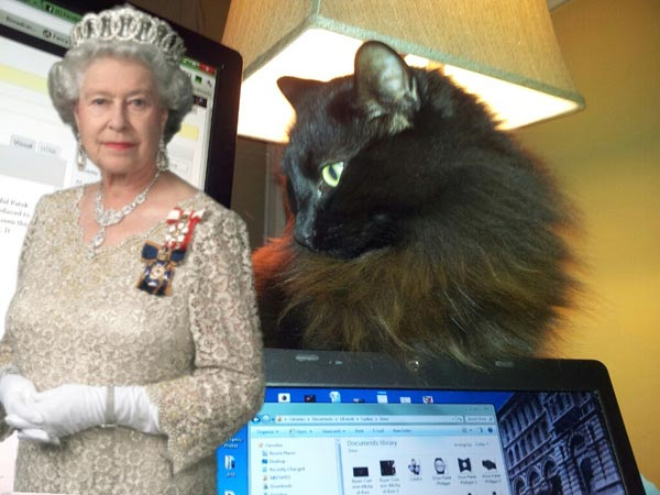 Camera ZOOM FX Android app:  My cat helping me write when the Queen came to visit