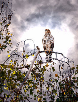 LandscapePro: bird in a tree, dramatic sky