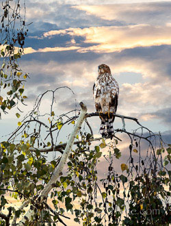 LandscapePro: bird in a tree, sunset